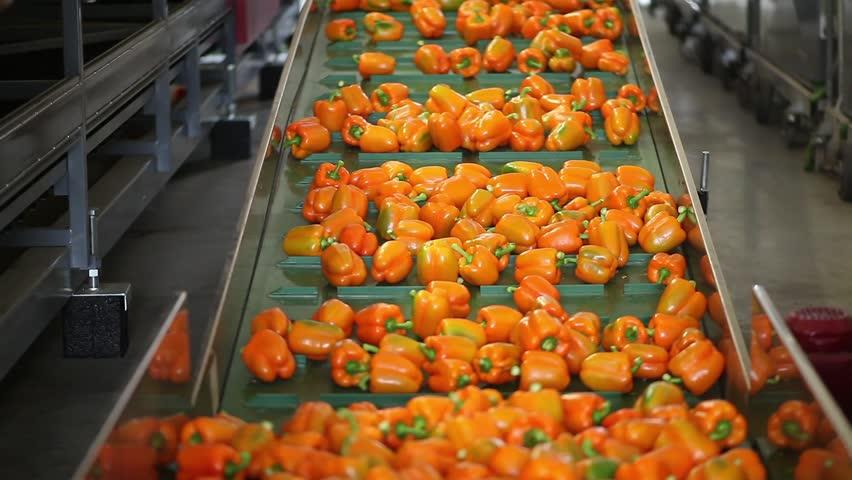 Băng tải chế biến rau củ quả