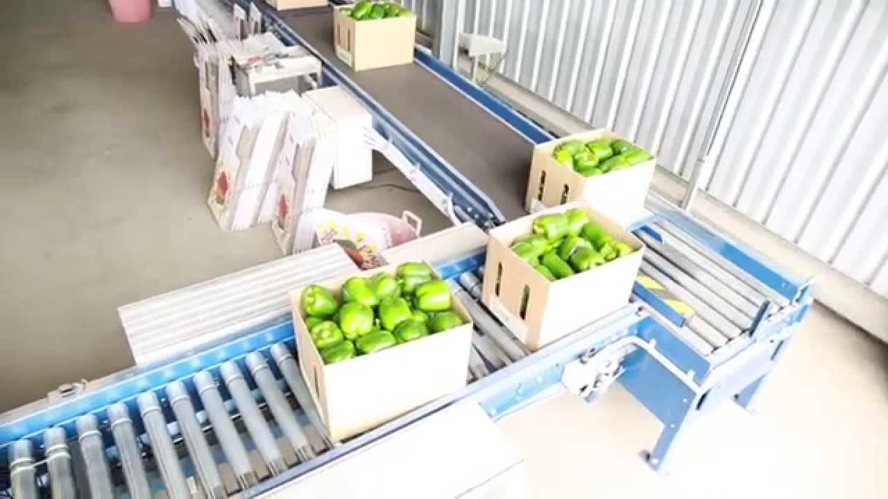 Băng tải chế biến rau quả