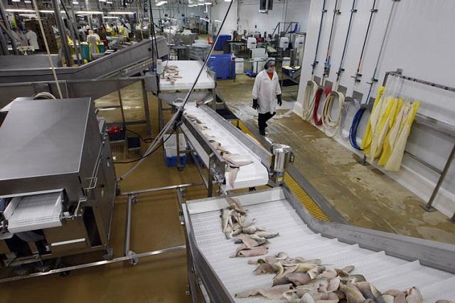 Băng tải chế biến thủy sản